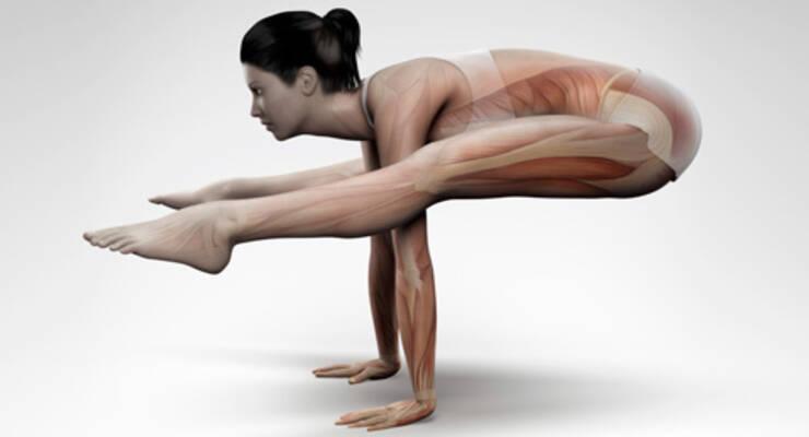 Фото к статье: Алена Мордовина о том, как йогалатес действует на мышцы