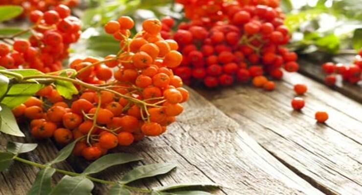 Фото к статье: Поздняя ягода: рецепты с калиной, рябиной, облепихой