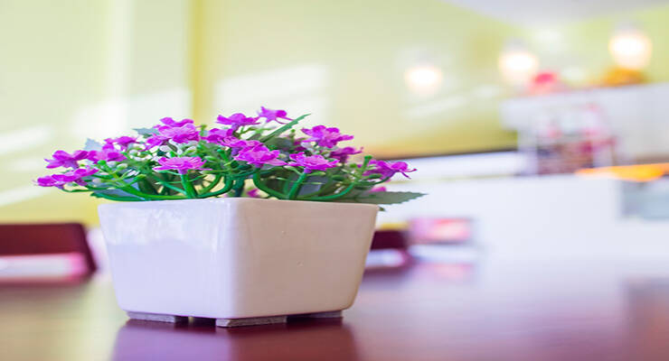 Фото к статье: 10 лучших комнатных растений, полезных для здоровья