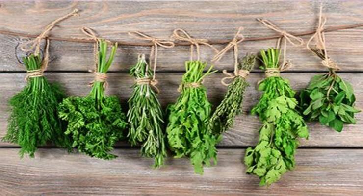 Фото к статье: Пряные травы: с чем их лучше сочетать