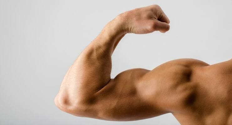 Фото к статье: 5 важных фактов о мышцах, которые помогут вам тренироваться эффективнее