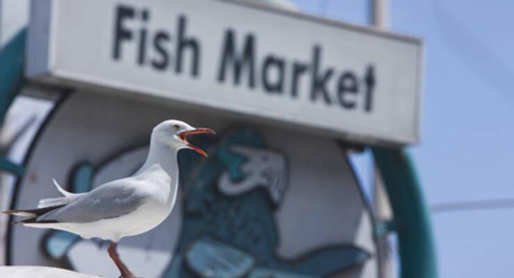Фото к статье: Как выбрать свежую рыбу и красную икру