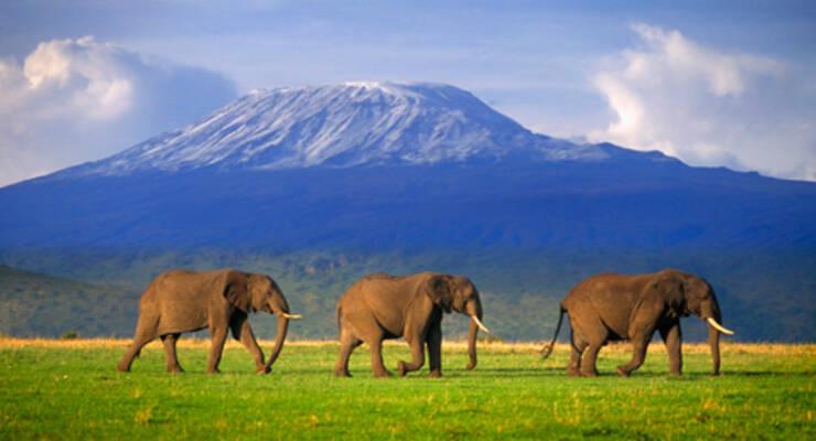 Фото к статье: Как Александр Мироненко покорял Килиманджаро