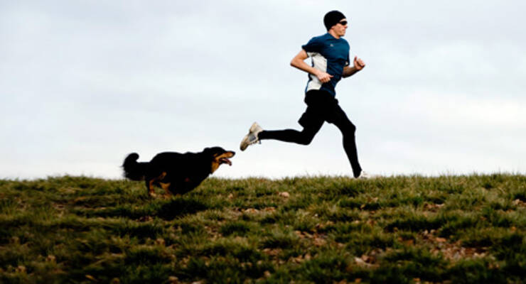 Фото к статье: Фитнес с собакой