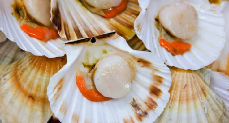 Фото к статье: «Хорошая еда». Морской гребешок: рагу, салат и карпаччо