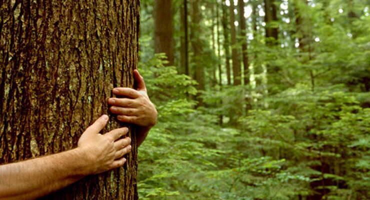 Фото к статье: Экотуризм