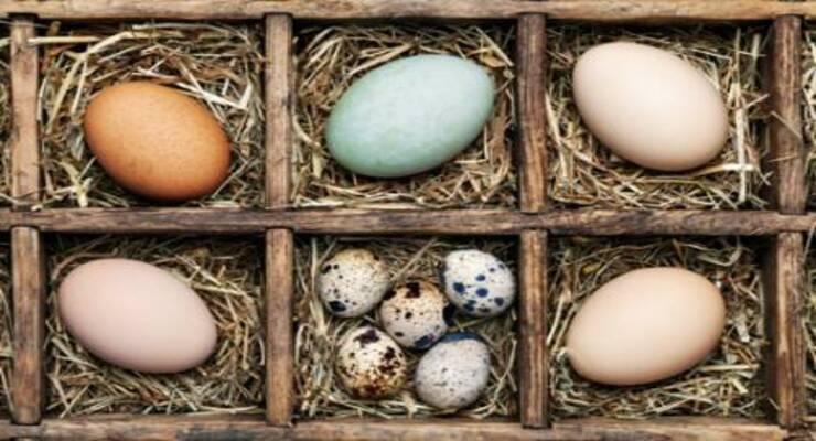 Фото к статье: Необычные блюда из яиц: куриных, перепелиных, утиных, индюшачьих