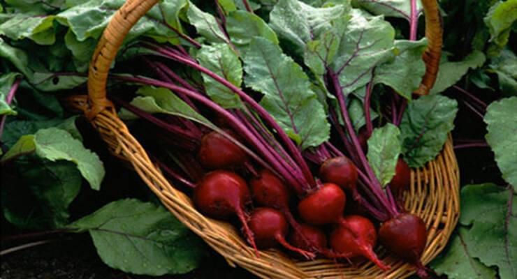 Фото к статье: Овощи на городских клумбах