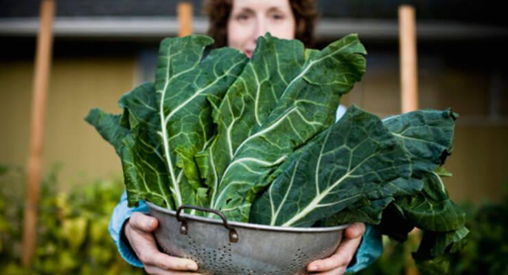 Фото к статье: Как вырастить зеленый салат дома