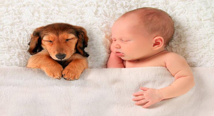 Фото к статье: Какое домашнее животное завести для ребенка