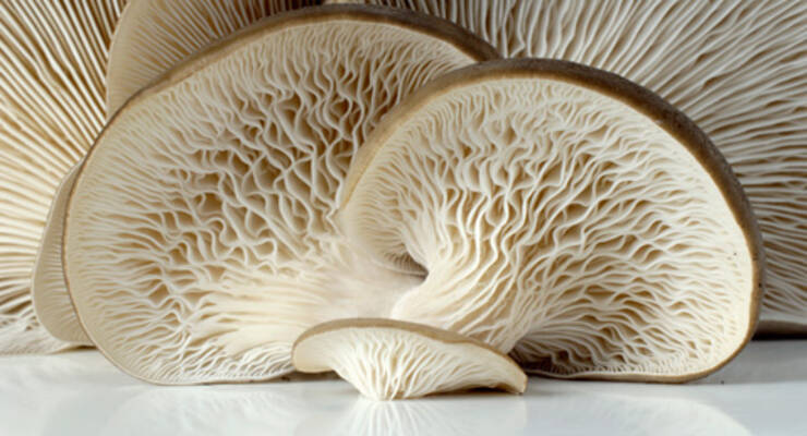 Фото к статье: «Хорошая еда». Рецепты с вешенками: суп, соте и запеченный лук с грибами