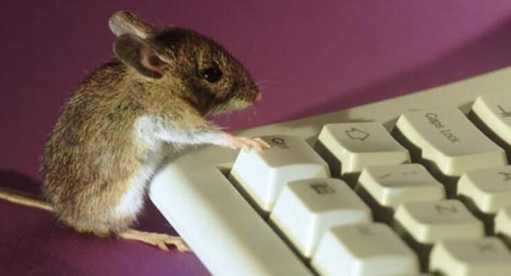 Фото к статье: Нашествие мышей на офисы