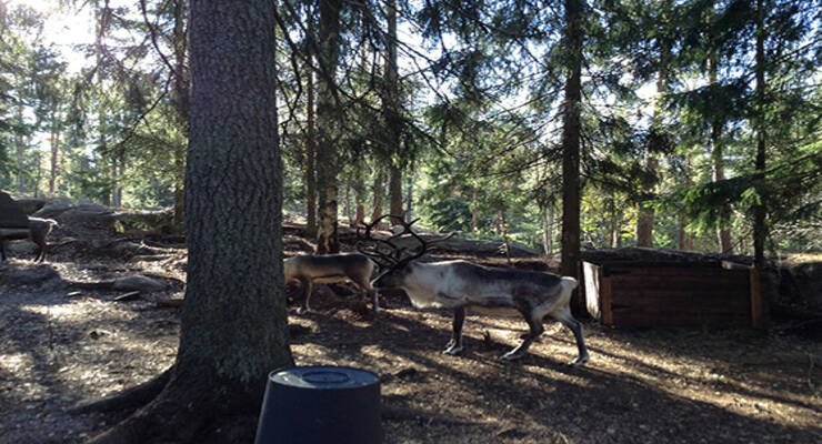 Фото к статье: Выходные в Хельсинки: релаксация и комфорт