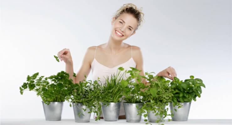 Фото к статье: Как вырастить зелень дома