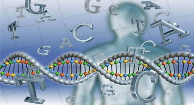 Фото к статье: Липосакция? Фитнес? Или питание по ДНК?